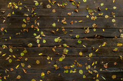 Autumn leaves on the wet boards Stock Photos