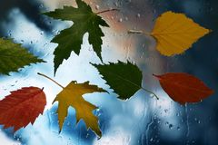 Autumn leaves on wet glass in rainy weather. The autumn leaves on wet glass in rainy weather Stock Images