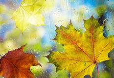 Autumn leaves on wet from rain glass Royalty Free Stock Images