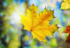 Autumn leaves on wet from rain glass Royalty Free Stock Image