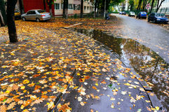 Autumn leaves on wet street Stock Photography