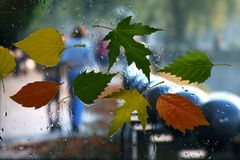 Autumn leaves on a wet window on a background of rainy weather Stock Image