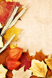 Autumn leaves and wheat ears Royalty Free Stock Photos