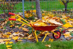 Autumn leaves in garden. Autumn leaves with wheelbarow and garden tools Royalty Free Stock Images