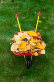 Autumn leaves in garden. Autumn leaves with wheelbarow and garden tools Stock Image