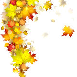 Autumn leaves royalty free illustration