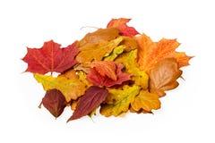 Autumn leaves on white Stock Photos