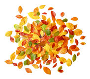Autumn leaves on white Stock Photos
