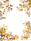 Autumn Leaves on White Stock Photography
