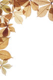 Autumn leaves on a white background. Dry leaves of a chestnut of yellow colour Royalty Free Stock Images