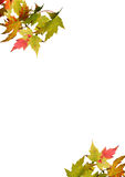 Autumn leaves on white background Stock Images
