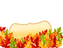 Autumn leaves on white background. Autumn falling leaves on white background with frame for seasonal design Stock Photo