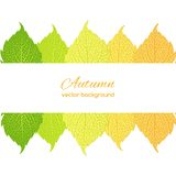 Autumn leaves on white background. Beautiful  illustration  with autumn leaves  on a white background Stock Photos