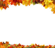 Autumn  leaves on white background Stock Photography