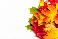 Autumn leaves on white Background, flat lay. Heap of Colorful Ma stock photos