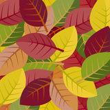Autumn leaves on a white background Royalty Free Stock Image