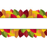 Autumn leaves on a white background Royalty Free Stock Photo