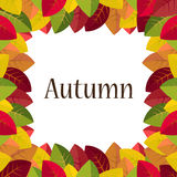 Autumn leaves on a white background Royalty Free Stock Images