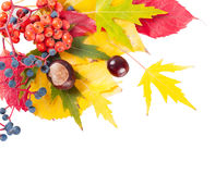 Autumn leaves on a white background Stock Photos