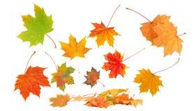 Autumn leaves on white Royalty Free Stock Photos