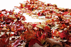 Autumn Leaves on white floor Royalty Free Stock Photography
