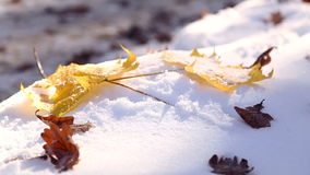 Autumn leaves on white snow close-up. The leaves fall on the snow in the park. The first snow in the autumn park. The leaves fall on the snow in the park stock video footage