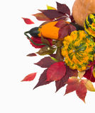 Autumn leaves of wild grapes pumpkins, foliage. Royalty Free Stock Images