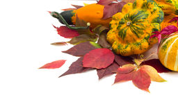 Autumn leaves of wild grapes pumpkins, foliage. Royalty Free Stock Photo