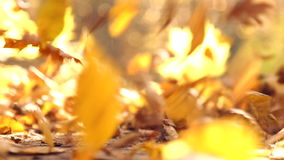 Autumn leaves wind blows.Autumn leaves in the park wind blows.Autumn leaves in the park in the countryside. stock video footage