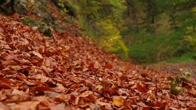 Autumn leaves in the wind stock video