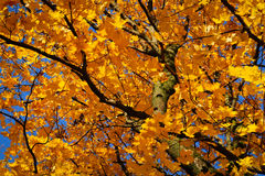 Autumn leaves on the wind Royalty Free Stock Images