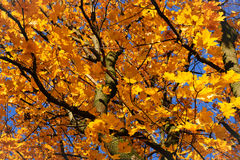 Autumn leaves on the wind Royalty Free Stock Image