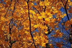 Autumn leaves on the wind Stock Photos