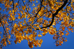Autumn leaves on the wind Stock Photography