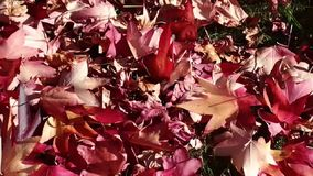 Autumn Leaves Windy Footage arkivfilmer