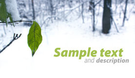 Autumn leaves, winter comes Stock Photo