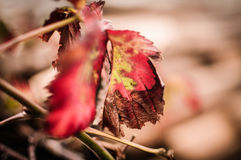 Autumn Leaves In Winter Royalty Free Stock Photo