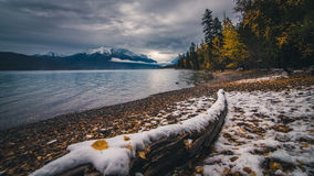 Autumn leaves on winter snow at Lake McDonald. Royalty Free Stock Images