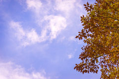 Autumn leaves and wispy clouds Royalty Free Stock Images