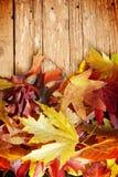 Autumn leaves on wood Stock Image