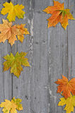 Autumn leaves  on wood background Stock Images