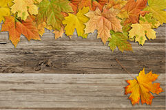 Autumn leaves  on wood background Royalty Free Stock Image