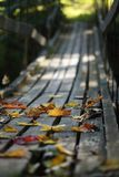 Autumn leaves on wood bridge. Colorful Autumnal leaves scattered on timber bridge Royalty Free Stock Images