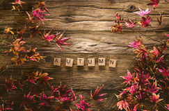 Autumn leaves on wood Stock Images