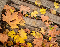 Autumn leaves on wood floor background Royalty Free Stock Images
