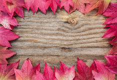 Autumn leaves wood frame Royalty Free Stock Image