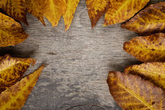 Autumn leaves on wood surface Stock Images