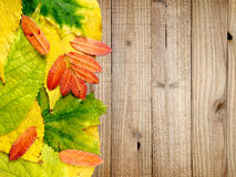 Autumn leaves on wood Royalty Free Stock Photo