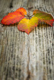 Autumn leaves on the wooden background. Autumn leaves on the old striped wooden background Royalty Free Stock Photos