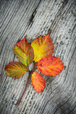 Autumn Leaves On The Wooden Background. Autumn leaves on the old striped wooden background Stock Images